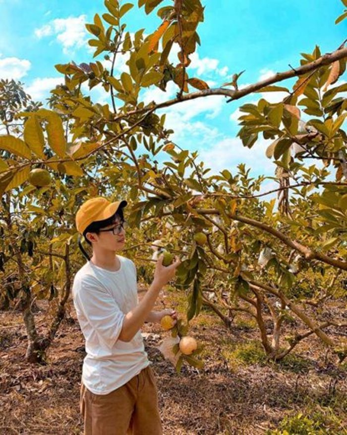 kinh nghiệm du lịch Đắk Glong vườn ổi
