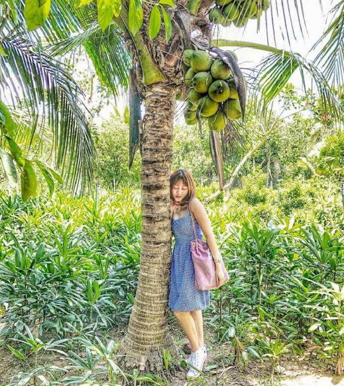 Explore the Que Ta garden tourist area - fruit trees
