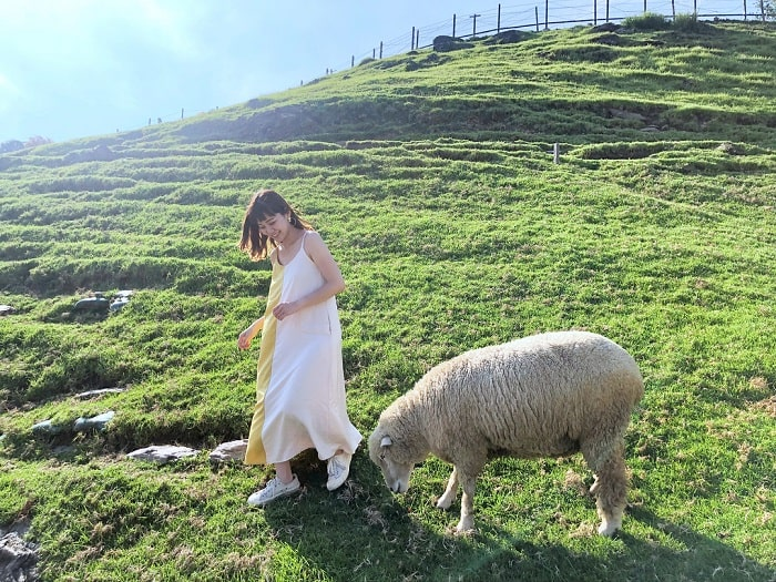 Cingjing Sheep Farm