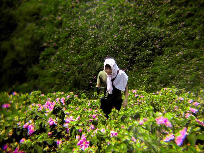 Ngỡ ngàng trước vẻ đẹp lạ thường bốn mùa hoa tại Bình Liêu