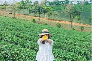 Khám phá những đồi chè đẹp nhất Lâm Đồng
