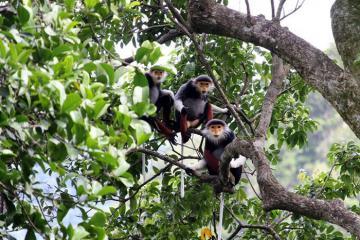Dạo quanh Khu Bảo tồn thiên nhiên Nà Hẩu, Yên Bái
