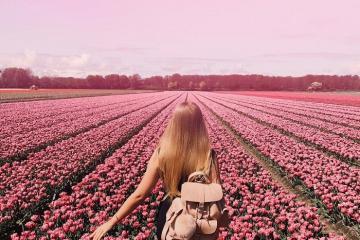 Du lịch Hà Lan vào tháng 8: Có gì hấp dẫn?