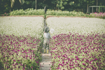 Vườn hoa mãn Đình Hồng Tiền Giang - điểm check in yêu thích của giới trẻ