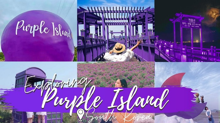 Check-in purple island in Korea - impressive dream paradise