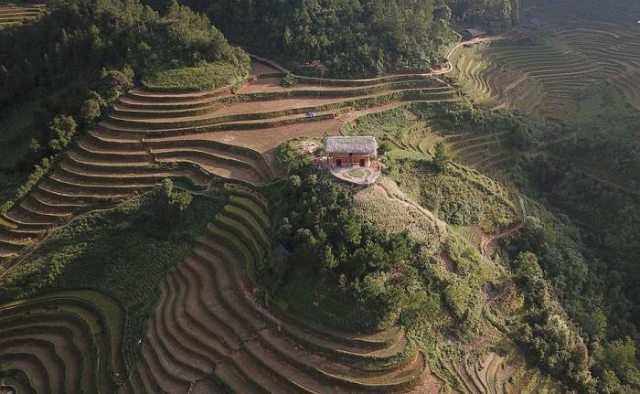 homestay view the rice season