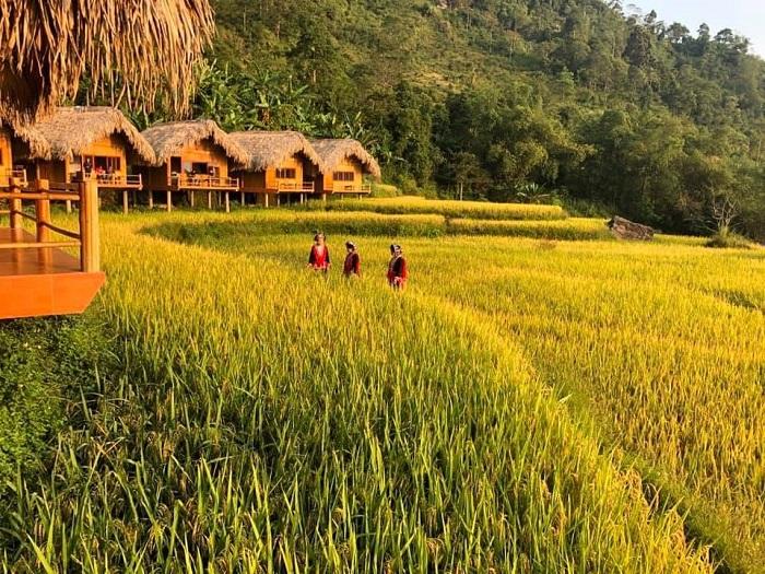 homestay view the rice season nine-hoang-su-phi-lodge