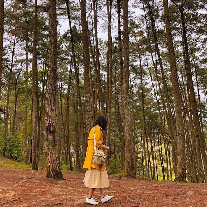 Tới rừng thông Yên Minh Hà Giang lạc vào vùng đất của những kẻ mộng mơ
