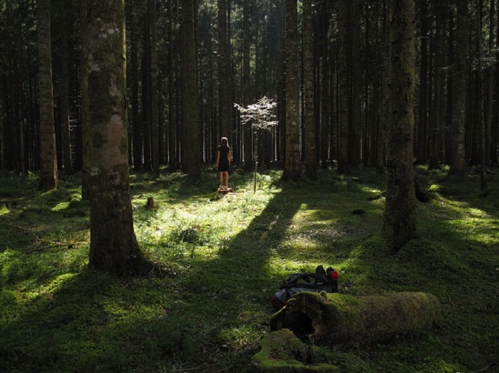 Lost in the Black Forest of Germany