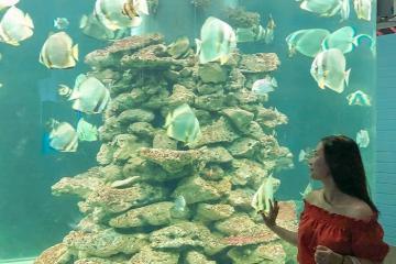 Lạc vào thế giới đại dương huyền bí tại viện Hải Dương học Nha Trang