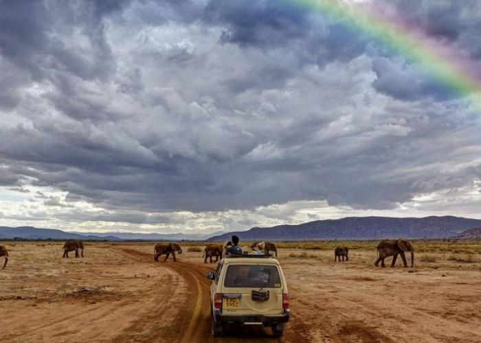 Trải nghiệm tour Safari ảo đắm chìm trong thế giới động vật ở Châu Phi