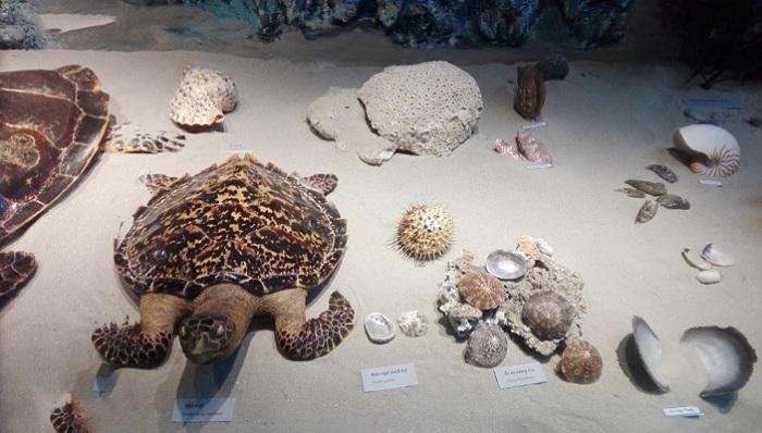 bảo tàng Côn Đảo-  trưng bày động vật quý