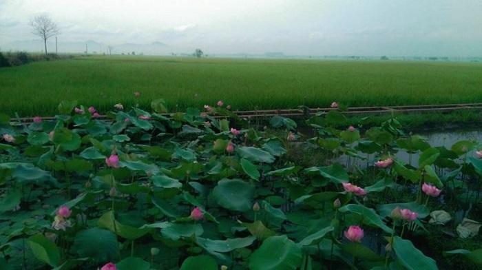 Tu Phuong That Dao eco-tourism area - lotus lake