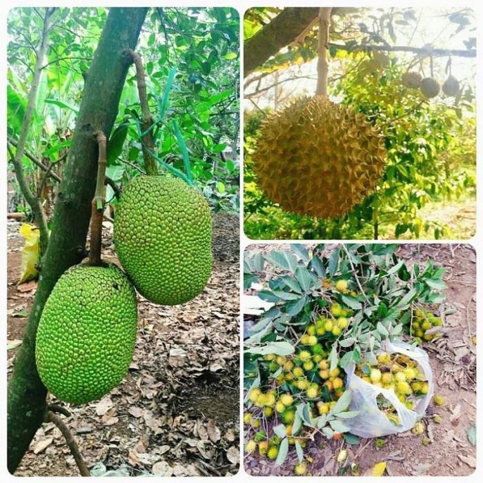 Tu Phuong That Dao eco-tourism area - garden