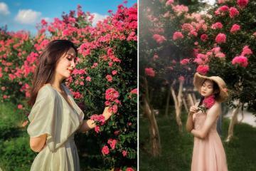 Có một mùa hoa tường vi Hà Nội lãng mạn chẳng kém ngôn tình!