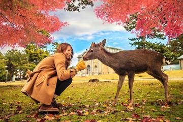 Đến công viên Nara Park Nhật Bản chơi đùa cùng những chú nai