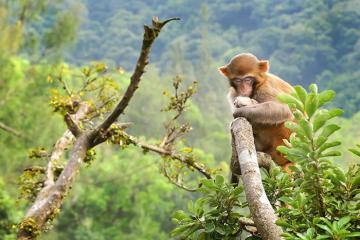 Đến ngay các khu bảo tồn thiên nhiên ở Hồng Kông đẹp, thú vị này!