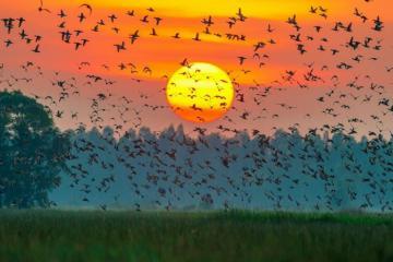 Sân chim Ngọc Hiển Cà Mau - điểm đến hấp dẫn du khách khi tới xứ Đất Mũi