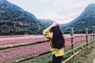 Khám phá thung lũng hoa Bắc Sơn - cánh đồng hoa lớn nhất Việt Nam