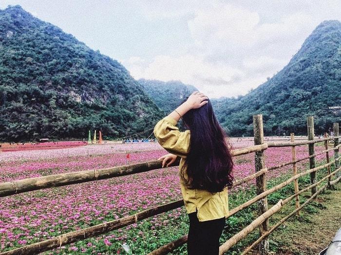 Hoa tím tại thung lũng Bắc Sơn