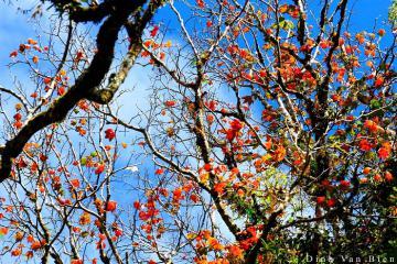 Truy tìm rừng lá phong đỏ rực chỉ cách thủ đô Hà Nội 2 tiếng chạy xe