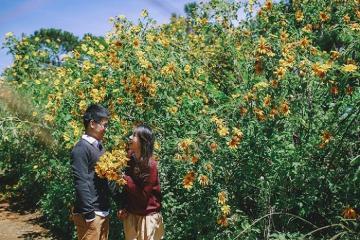 Kinh nghiệm đi vườn quốc gia Ba Vì 'săn' mùa hoa dã quỳ vàng rực