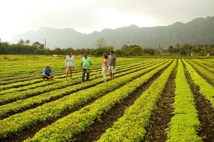 Kona Coffee Farms -  địa điểm du lịch nổi tiếng ở Hawaii