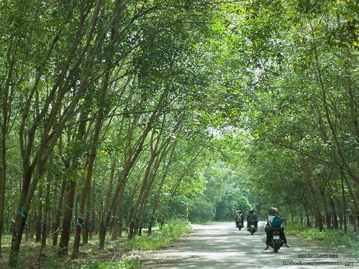 Check in đập Phước Hòa Bình Phước - hòa mình cùng thiên nhiên xanh mát