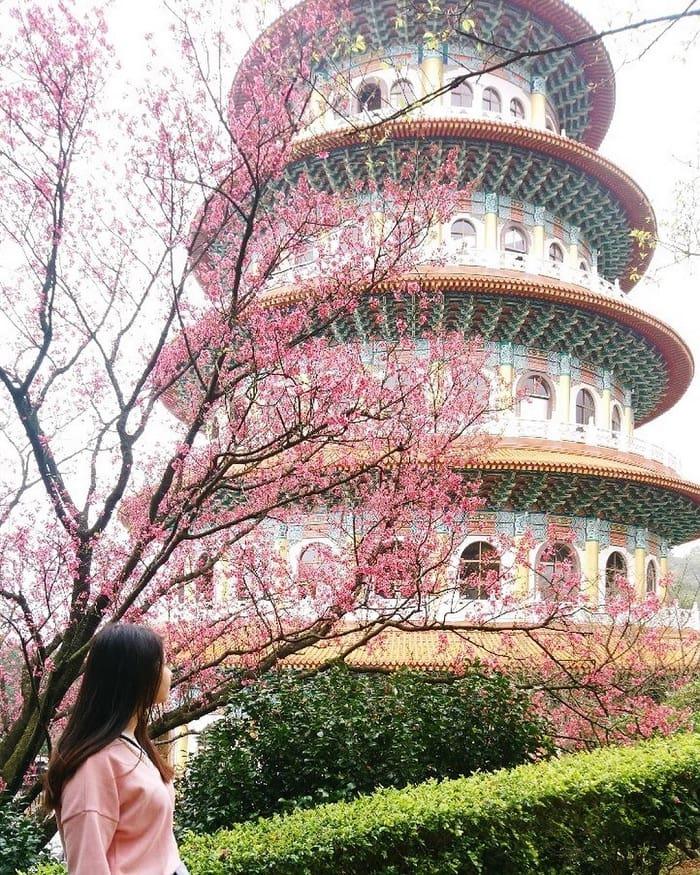 vẻ đẹp của hoa anh đào tại đền Wuji Tianyuan