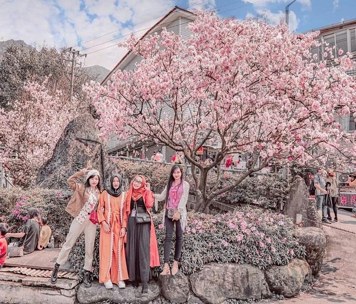 hoa anh đào trắng hồng - điểm nhấn của đền Wuji Tianyuan