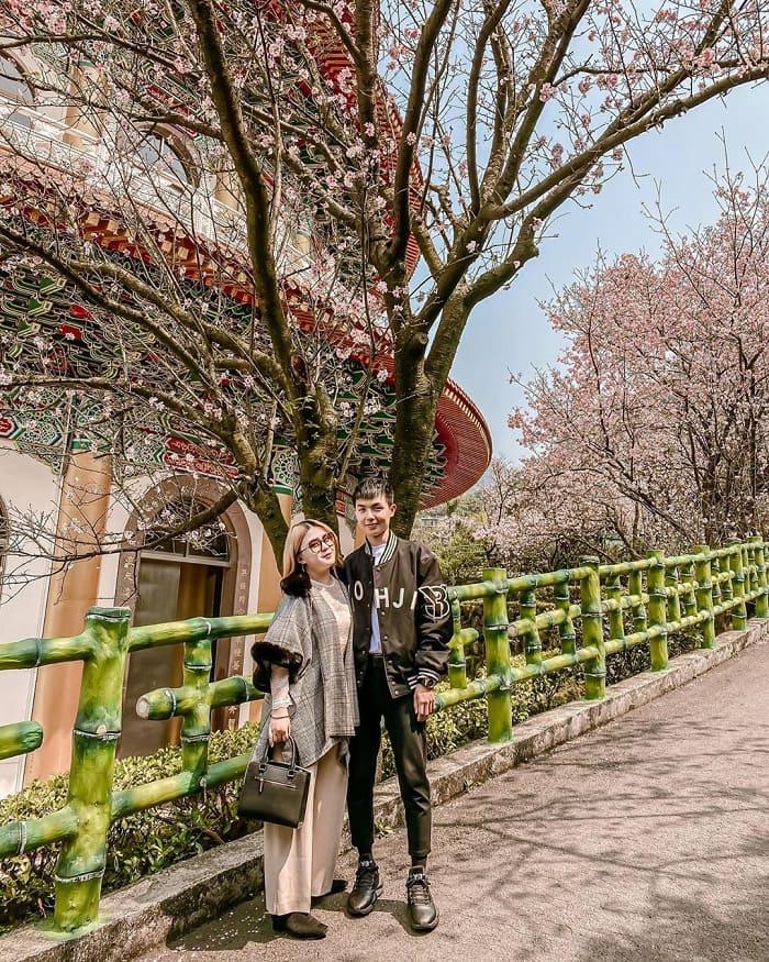 buổi sáng - thời điểm tuyệt nhất để ngắm hoa anh dào tại đền Wuji Tianyuan