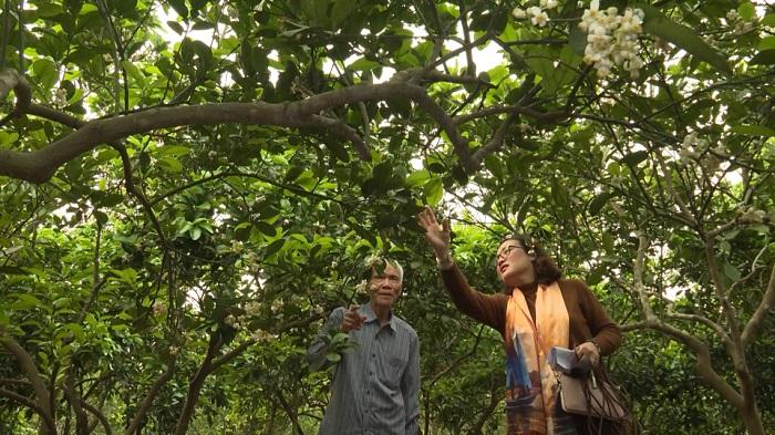 Vườn Bách Thuận là điểm du lịch yêu thích ở Thái Bình - Kinh nghiệm đi phượt Thái Bình từ Hà Nội