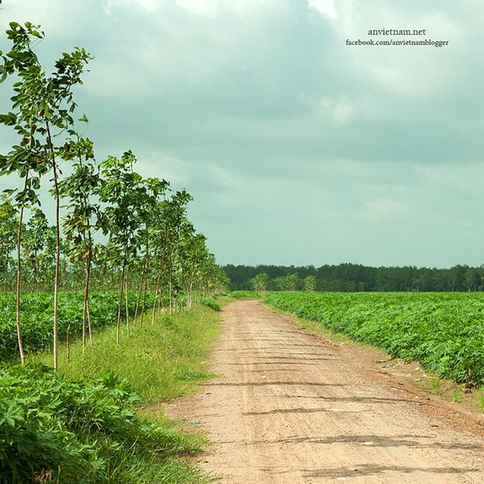 Check in đập Phước Hòa - Những con đường đất đỏ trải dài