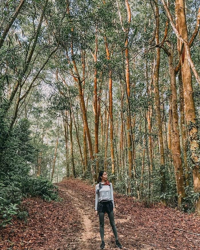 Mount Dinh Vung Tau - a path full of green trees
