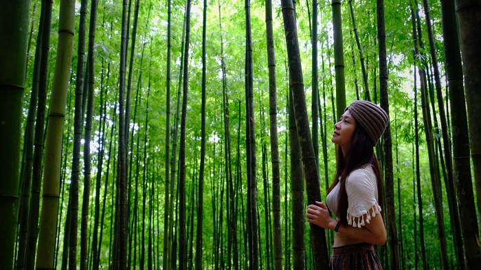 Virtual life in Mu Cang Chai bamboo forest
