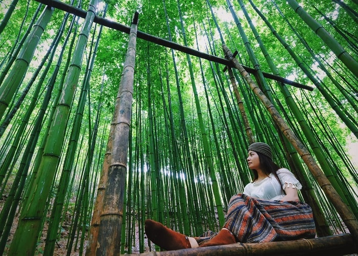 Check in Mu Cang Chai bamboo forest