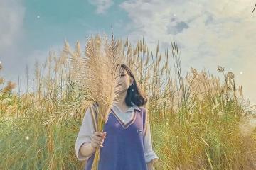 Ngỡ lạc vào thế giới cổ tích tại các đồng cỏ lau Hà Nội