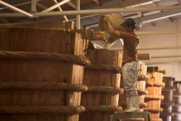 Ghé thăm nhà thùng nước mắm Phú Quốc tìm hiểu quy trình làm mắm truyền thống