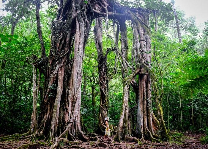 Khám phá những loài thực vật kỳ lạ trong vườn bách thảo Bali