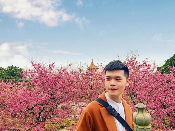 hoa anh đào hồng - loài hoa đẹp của đền Wuji Tianyuan