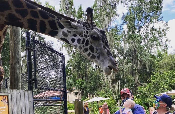 Sở thú & vườn bách thảo Central Florida - Kinh nghiệm du lịch Orlando