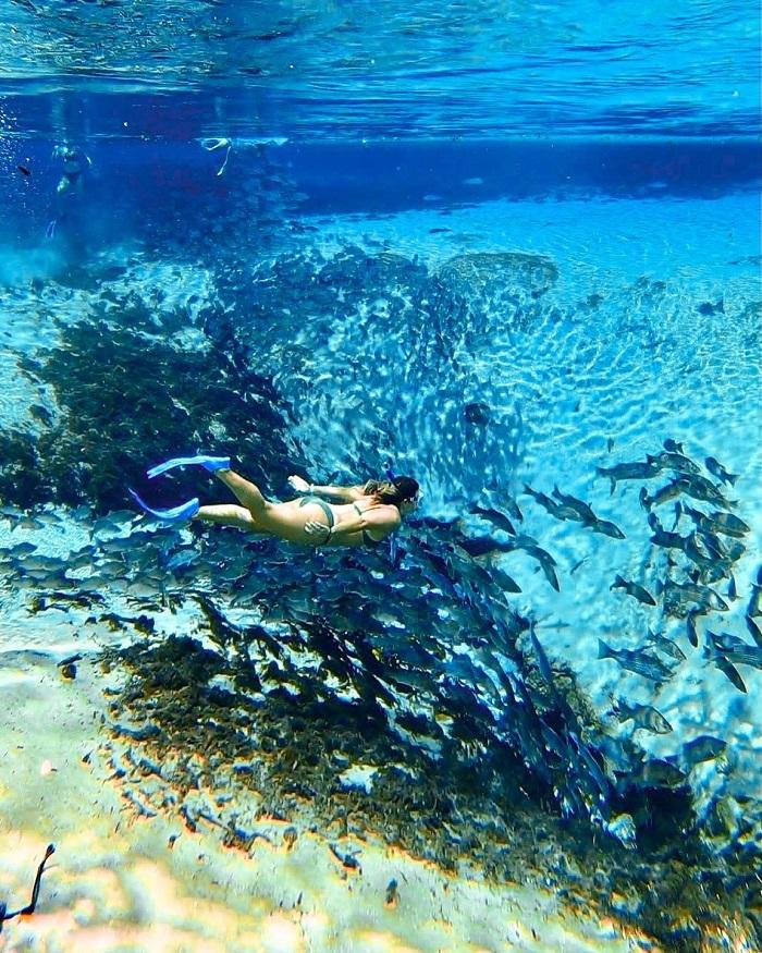 SeaWorld Orlando - Kinh nghiệm du lịch Orlando
