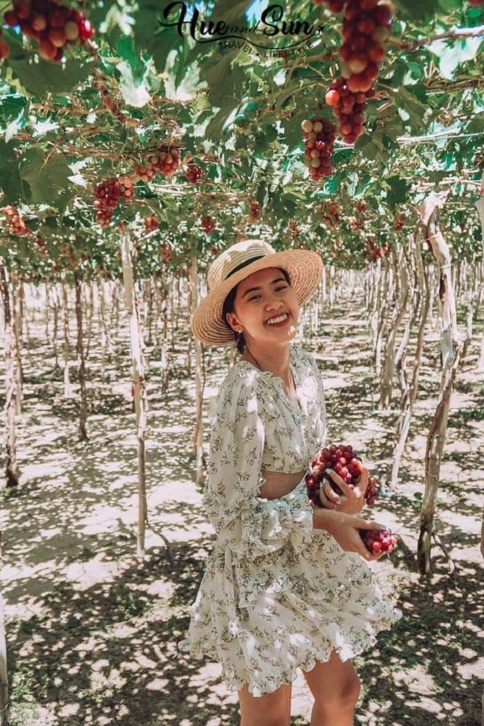 Thai An Vineyard - tourist destination near coral island Ninh Thuan