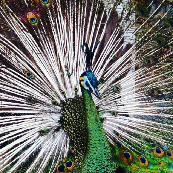 công - động vật trong Vườn bách thảo Hà Nội