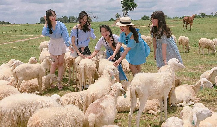 Beautiful check-in places in Vung Tau - Nghe stream sheep field