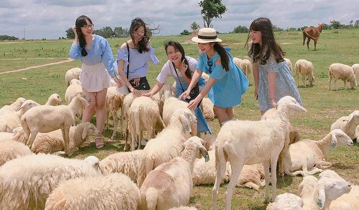 Những địa điểm check-in đẹp ở Vũng Tàu- đồng cừu suối Nghệ