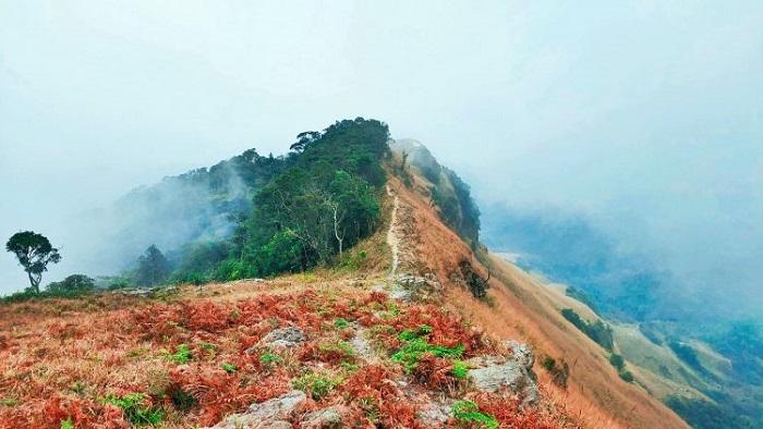 Vẻ đẹp rực rỡ của núi Phia Po vào mùa xuân