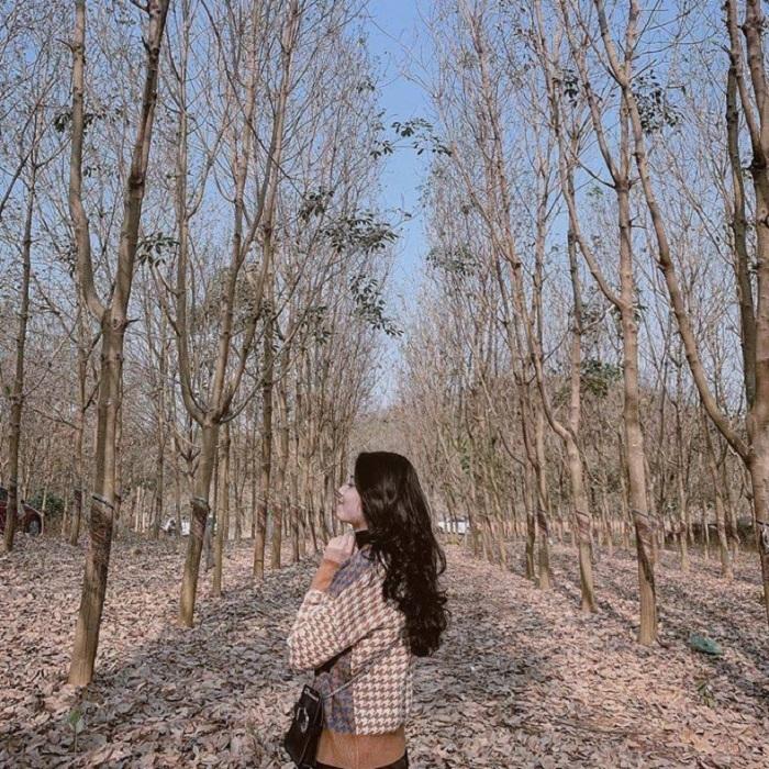 du lịch Bù Đăng Bình Phước - rừng cao su
