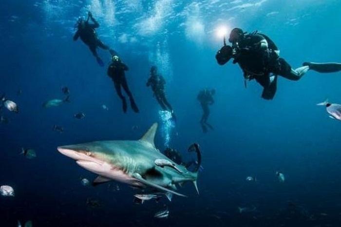 Bơi cùng cá mập - Trải nghiệm khi du lịch đảo Sipandan