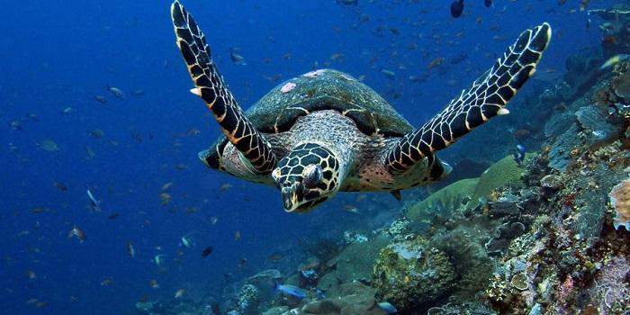 Thông tin và kinh nghiệm du lịch đảo rùa Selingan ở Malaysia